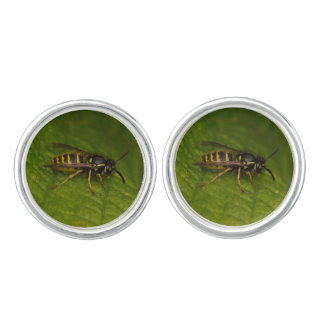 Common Wasp Cufflinks