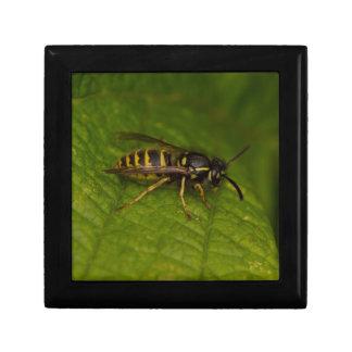 Common Wasp Gift Box