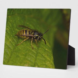 Common Wasp Plaque