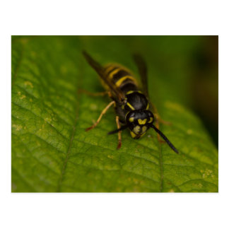 Common Wasp Postcard