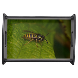 Common Wasp Service Trays