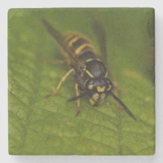 Common Wasp Stone Coaster