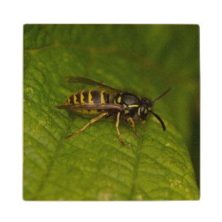 Common Wasp Wood Coaster
