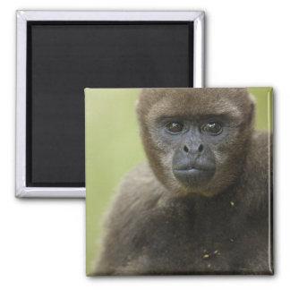 Common Woolly Monkey Lagothris lagothricha), Square Magnet