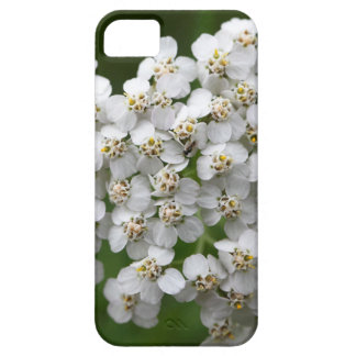 Common yarrow (Achillea millefolium) iPhone 5 Case