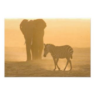 Common Zebra, Equus burchelli, and Elephant, Photo Art