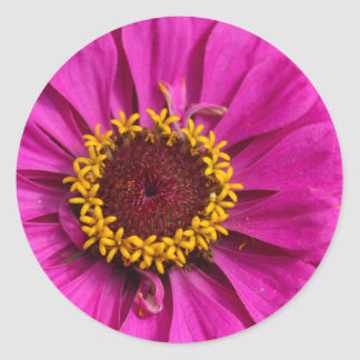 Common zinnia (Zinnia elegans) Classic Round Sticker