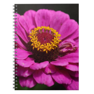 Common zinnia (Zinnia elegans) Spiral Notebooks