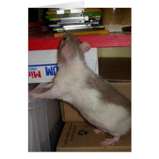 Computer Rat Card