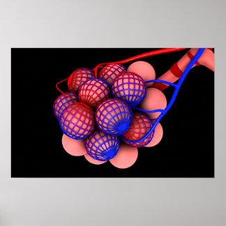 Conceptual Image Of Alveoli 1 Poster