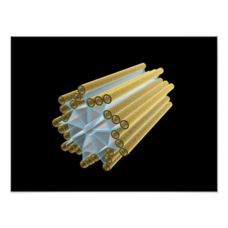 Conceptual Image Of Centriole Poster