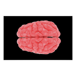Conceptual Image Of Human Brain 10 Poster