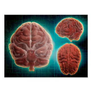 Conceptual Image Of Human Brain At Different Poster