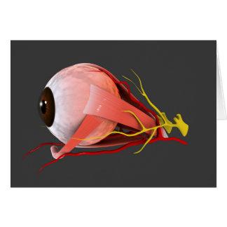 Conceptual Image Of Human Eye Anatomy 2 Greeting Cards