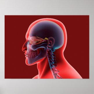 Conceptual Image Of Human Eye And Skull Poster