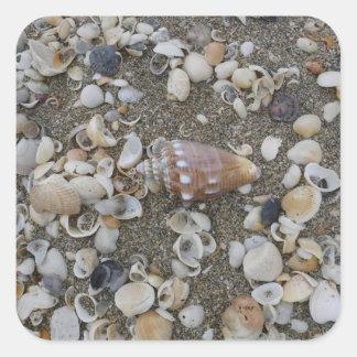 Conch Seashell Treasure Square Sticker