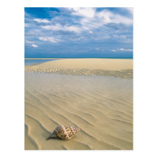 Conch Shell | Bahamas Postcard