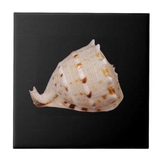 Conch Shell Ceramic Photo Tile