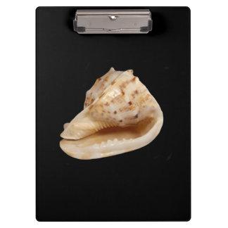 Conch Shell Clipboard