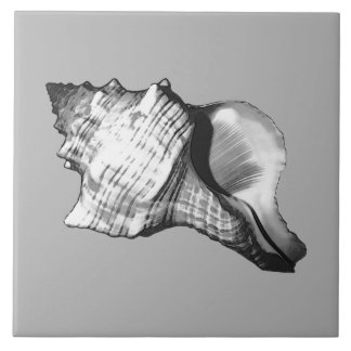 Conch shell sketch - shades of grey and white tile