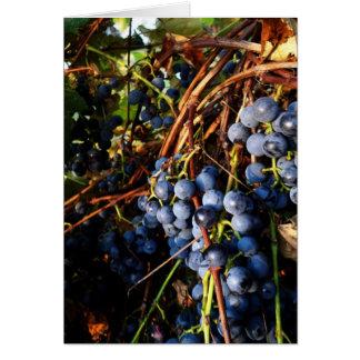 Concord Grape Vines Card