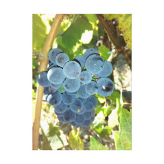 Concord Grapes Canvas Print