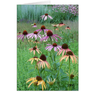 Cone Flower Dance Card