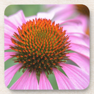 Cone flower drink coasters