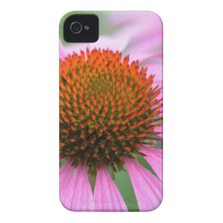 Cone flower iPhone 4 covers