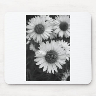Cone Flowers - Daisy - In Black and White Mouse Pad