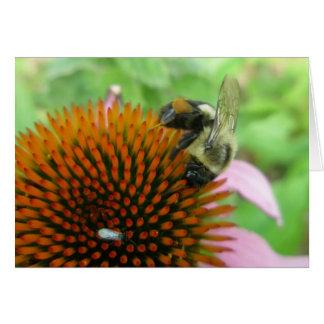 Coneflower & Eastern Carpenter Bee Items Card