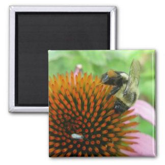 Coneflower & Eastern Carpenter Bee Items Square Magnet