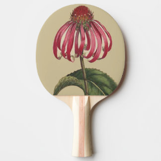 Coneflower Echinacea Flower Floral Paddle