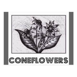 Coneflowers Post Cards
