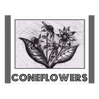 Coneflowers Postcard
