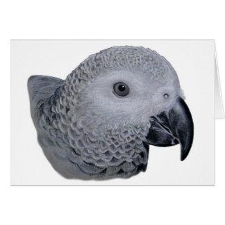 Congo African Grey parrot Card