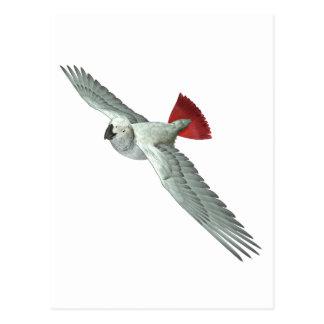 Congo African Grey Parrot Postcard
