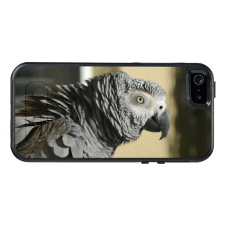 Congo African Grey Parrot with Ruffled Feathers OtterBox iPhone 5/5s/SE Case