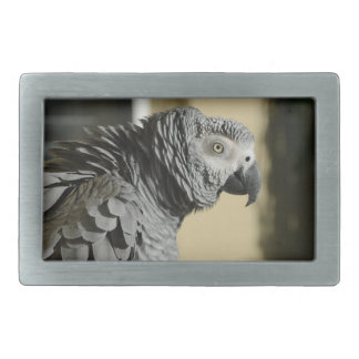 Congo African Grey Parrot with Ruffled Feathers Rectangular Belt Buckles