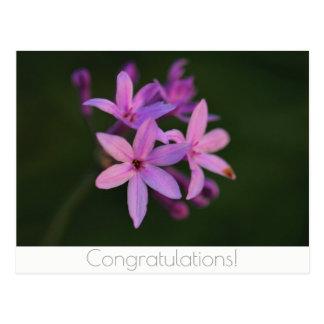Congratulations Flowers Postcard