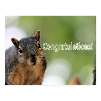 Congratulations squirrel postcard