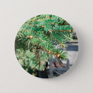 Conifer branch at the city street 6 cm round badge