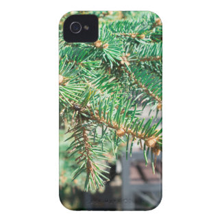 Conifer branch at the city street Case-Mate iPhone 4 case