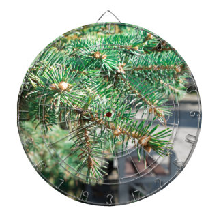 Conifer branch at the city street dartboard