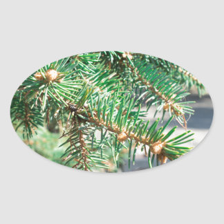 Conifer branch at the city street oval sticker