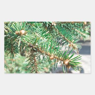 Conifer branch at the city street rectangular sticker