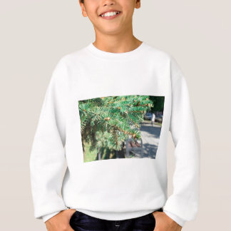 Conifer branch at the city street sweatshirt