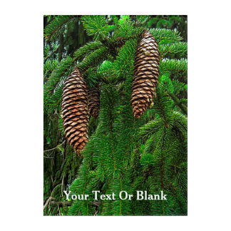 Conifer Cones And Needles Acrylic Wall Art