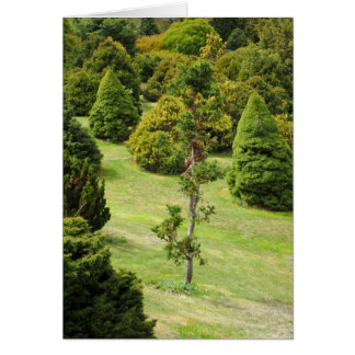 Conifers Mt Lofty Botanical Gardens Card