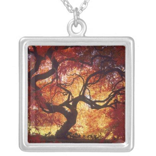 Connecticut: Darien, Japanese maple 'Acer Custom Necklace